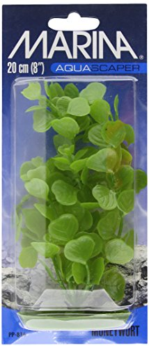 Marina Aquascaper Medium Moneywort Plant, 8-Inch