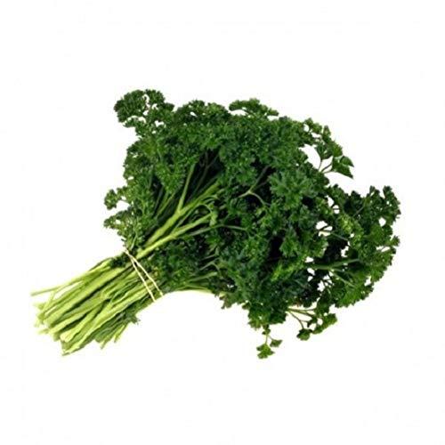 11.75g Frisé mousse persil Graines ~ cuisine Herb Spice Garden ~ Salades