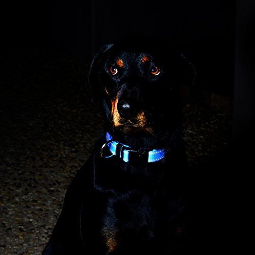 Reflective Dog Collar for Large Dogs, Adjustable from 13-22 inches, Blue