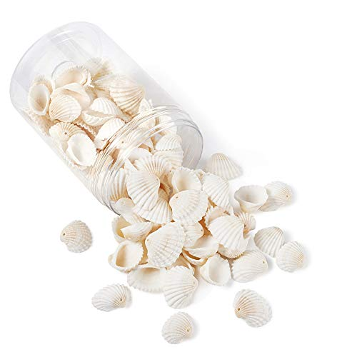 Craftdady 117 colgantes de concha de almeja natural, 21,5 – 24,5 x 8,5 – 11,5 – cuentas de concha de mar para jarrón relleno de peces, agujero para hacer joyas: 1,5 – 1,6 mm