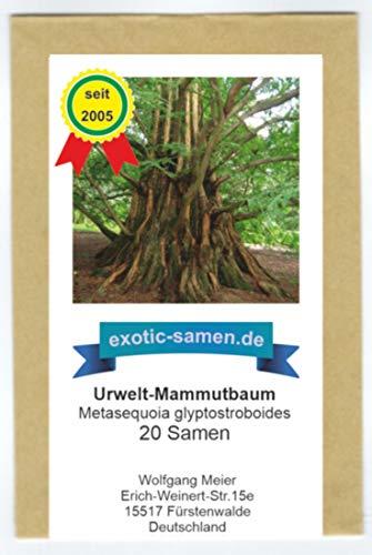 Metasequoia glyptostroboides - Urwelt-Mammutbaum (20 Samen)