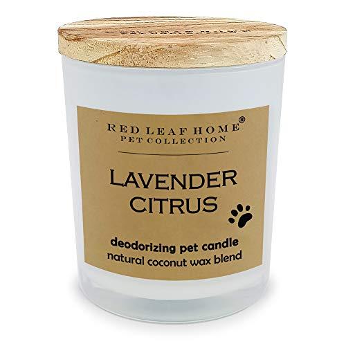 """Red Leaf Home Lavender Citrus - The Pet Collection (Medium: 3.5"""" D x 4.24"""" H   11oz)"""