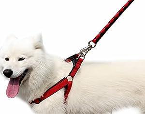Edith qi Laisse, 1.5m de long Marche Laisse de dressage réglable Laisse en nylon de formation, grand Petit Animal Chien Chat Gilet Harnais Ensemble de Pets Laisse pour chien