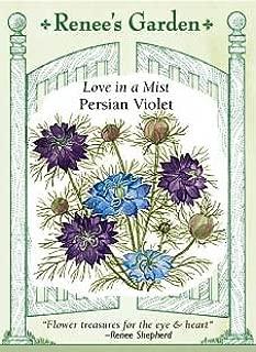 Best persian violet seeds Reviews