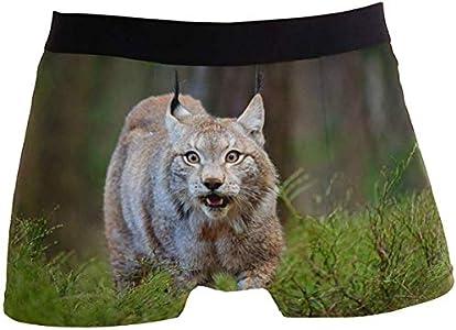 Calzoncillos Calzoncillos para Hombre Cute Bobcat Wildlife Boxer Briefs Men's Underwear Boys Stretch Breathable Low Rise Trunks S