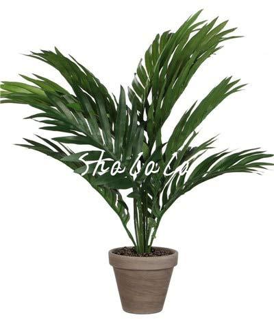 SANHOC 10 PC Weinflasche Palmen-Bonsais Seltene Hyophorbe lagenicaulis Bonsai-Baum Tropische Pflanzen für Haus Garten Bepflanzung Dekoration Pflanze: 19