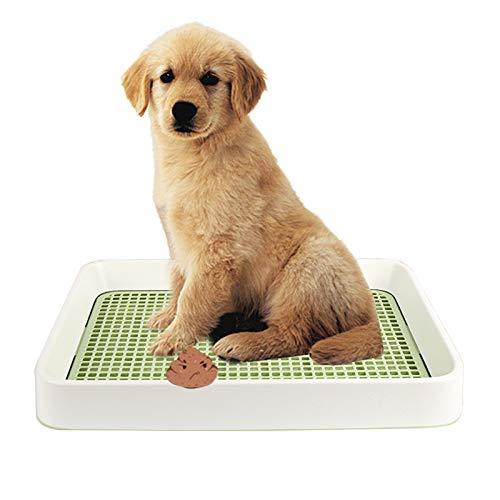 Inodoro para Mascotas Perro Bandeja de Entrenamiento Pequeña para Cachorros para Golden Retriever Labrador, Resina Reutilizable No Tóxica para Balcón/ Patio Interior, 49,2x37,2x6Cm ( Color : Green )