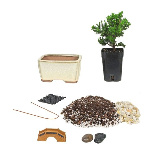 Eve's Bonsai Tree Starter Kit, Complete Do-It-Yourself Kit with 2 Year Old Japanese Juniper