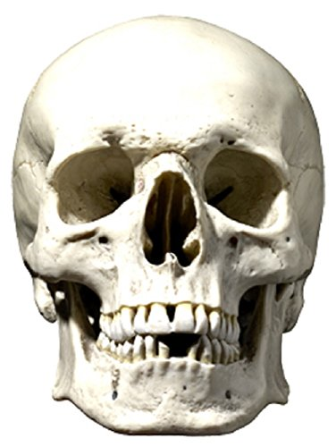 Star Cutouts bedrukt masker van het doodshoofd-masker