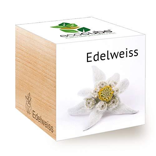 Feel Green Ecocube Edelweiss, Idée Cadeau (100% Ecologique), Grow-Your-Own/Kit Prêt-à-Pousser, Plantes Dans Des Cubes En Bois 7.5cm, Produit En Autriche