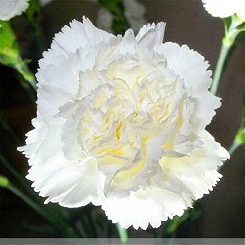 Eantpure Bunte Blumen,Vier Jahreszeiten...