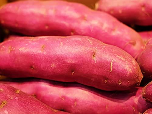 千葉県産 紫芋 パープルスイートロード 秀品 Lサイズ(約13本入)約5kg