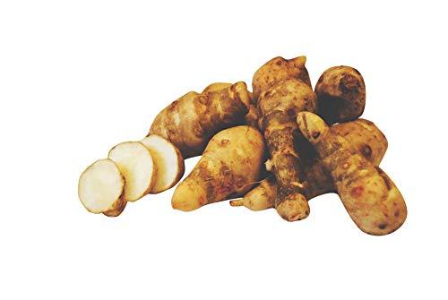 Topinambur 1kg Sorte: Gute Gelbe winterhart frische Topinamburknollen schmecken leicht süßlich-nussig Knollen zum Verzehr und zum Pflanzen