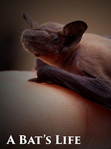 A Bat's Life
