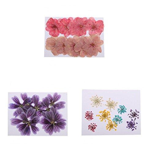 Sharplace 30pz Foglie Pressate Fiore Secco Ornamento Abbellimenti Scrapbooking Artigianato DIY