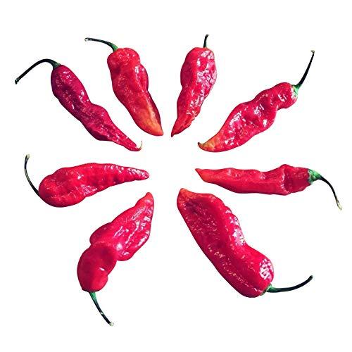 Bhut Jolokia Red 20 Samen (eine der extrem scharfen Chilis der Welt) mit Spitzenwerten von 1.000.000 Scoville