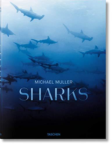 Michael Muller. Sharks