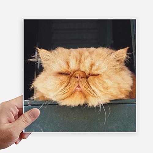 DIYthinker Pousse Funny Animal Chat Jaune Autocollant carré de 20 cm Mur Valise pour Ordinateur Portable Motobike Decal 4Pcs 20cm x 20cm Multicolor