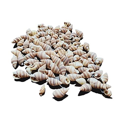 TL TONGLING Conchas 100 UNIDS Concha Natural Cáscara Náutica Decoración para el...