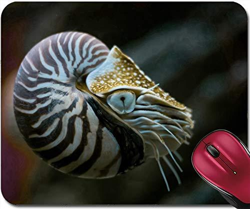 Mousepad Nautilus Ein Lebendes Fossil Im Aquarium 30X25CM,Rutschfeste Unterseite,Maus Mausunterlage