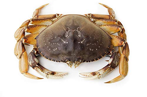 Live Dungeness Crab (16 lbs)