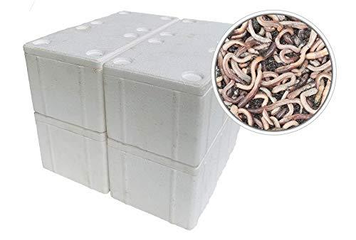 SUPERWURM 200 Stück Kanadische Tauwürmer in der Styroporbox - inkl. 4 Coolpacks - Angelköder