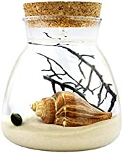 NW Wholesaler - Marimo Moss Ball Glass Terrarium Complete Kit with Multi Color and Display LED Lights (White Sand)