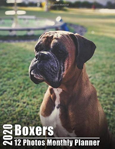 Boxers 2020 Monthly Photos Planner 8.5x11: Academic Calendar Large Print Agenda Organizer for Scheduling With High Quality Boxer Image each Month, Unique Vivid Color and Inspirational Quote