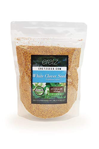 White Clover Seed by Eretz - Premium Willamette Valley, Oregon Grown Non-GMO Seeds, No Coatings, No Weed Seeds (1lb)
