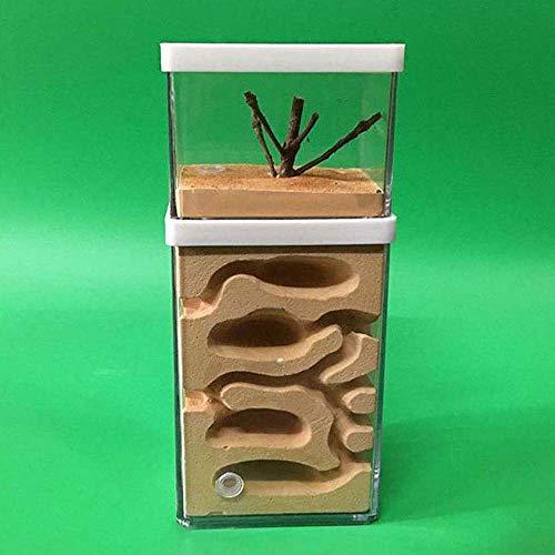 FXQIN Ameisenfarm, Ameisen-Gips-Nest Ameisen Werkstatt, Ameisen-Labyrinth, Großer Sichtbereich für Kinder und Erwachsene