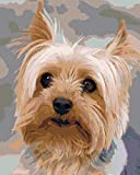 Pintar por Numeros Adultos Yorkshire Terrier Pintura Guiada por Numeros,Niños DIY Pintura por Números con Pinceles y Pinturas-hogar decoración de casa 40 x 50 cm(con marco)