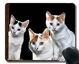 Alfombrilla de ratón con Borde Cosido, Gatitos Cara Gatos Sill Sill 78471 Gaming Mouse Mat...
