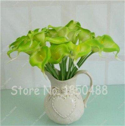 Multi-couleur Calla Fleur vrai Calla Lily Graines d'amour élégant Noble Symbolise Graines de fleurs de plantes d'intérieur Bonsai Balcon Fleur-50 8