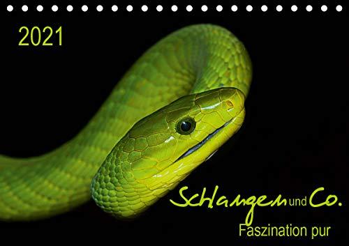 Schlangen und Co. - Faszination pur (Tischkalender 2021 DIN A5 quer)