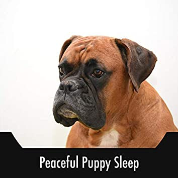 Peaceful Puppy Sleep