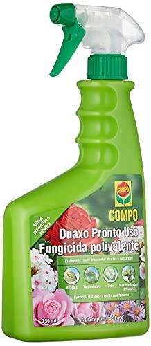 COMPO Duaxo Pronto Uso, Fungicida Polivalente, Per la Protezione delle Piante Ornamentali da casa e...