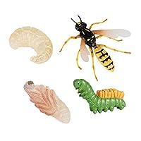 Perfeclan ライフサイクルのハチ、自然昆虫ライフサイクル成長モデルゲーム小道具、シミュレーション昆虫動物自然教育玩具