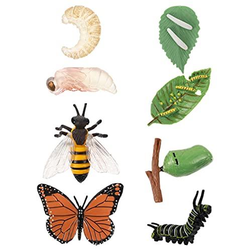 Balacoo 2 Sets Insekten Wachstum Zyklus Modell Simulation Schmetterlinge Bee Wachstum Zyklus Modelle Insekten Figuren für Kinder Bildungs