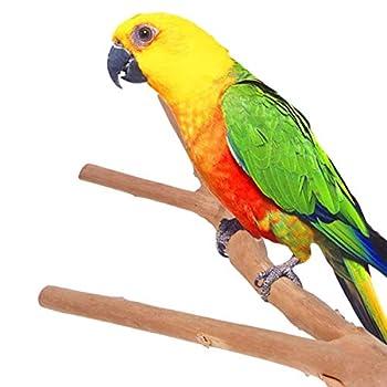 POPETPOP Perche Doiseau - Perroquet en Bois Naturel Oiseau Perche Bois Fourche Stand Jouet Accessoires de Cage à Oiseaux Bâton en Bois pour Percher Perroquet Broyage