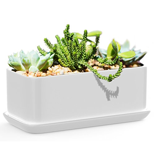 Succulents Choice 10 inch Rectangular White Ceramic Succulent Planter: Modern Design Pot Includes Fitted Saucer With Drain Holes