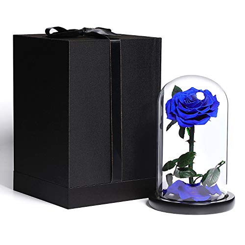 Beauty and the Beast Blue rose