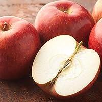りんご 訳あり リンゴ 約1.5kg 長野・青森県産 2セット注文で1セットおまけ サンふじ つがる ジョナゴールド ふじ 林檎