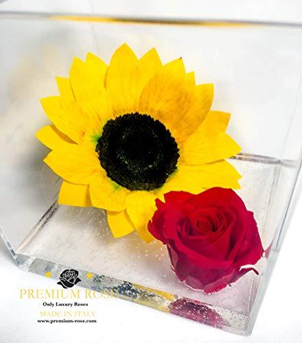 A 1029 Cuberose Cubo Rosa Stabilizzata e Girasole stabilizzato in cubo da 12cm 12x12x12 Il Cubo con Una Vera e Propria Rosa eterna insiene ad Un Girasole, Dura più di 5 Anni, Premium-Rose