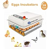 S SMAUTOP Incubateur Oeufs Couveuse Automatique 16 œufs Retournement Automatique Mini Appareil à Couveuse Température Réglable pour Volaille, Caille, Oie Canard, Pigeon, Reptile
