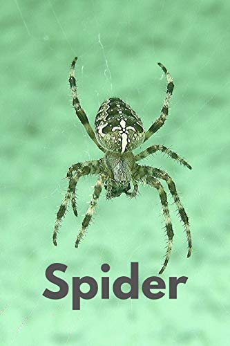 Spider: Animal ,Mammal, Book Gifts For Women Men Kids Teens Girls Boys (110 Pages, Lined , 6 x 9)