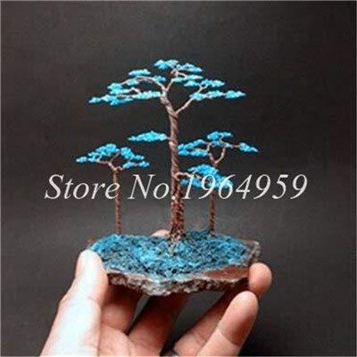 Shopmeeko Graines: Bonsai 30 Pcs coloré Arbre mixte Bonsai Starter Juniper japonais -Juniperus PROCUMBENS & # 39; Nana & # 39; Plante en pot Absorber gaz nocifs: 6