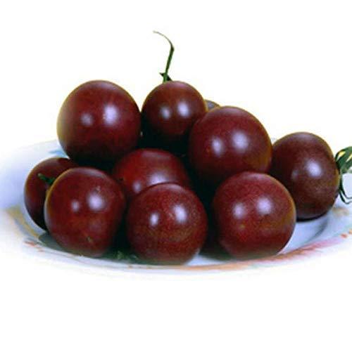 Lila Tomate 30+ Samen Bio-Samen Große Kirschtomate Bio Non-GMO Süßes frisches Obst Gemüse Garten Samen zum Pflanzen Lecker Großartig