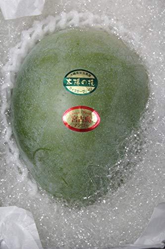 みんなを元気に!!早期予約 宮古島産マンゴーキャンペーン☆おかげさまで20周年☆ 2020年 緑の甘いマンゴー 最大級1玉 900g 【送料無料】