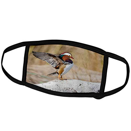 3dRose China, Beijing, Male Mandarin Duck on a Rock - AS07 AGA0039 -. - Face Covers (fc_132375_2)