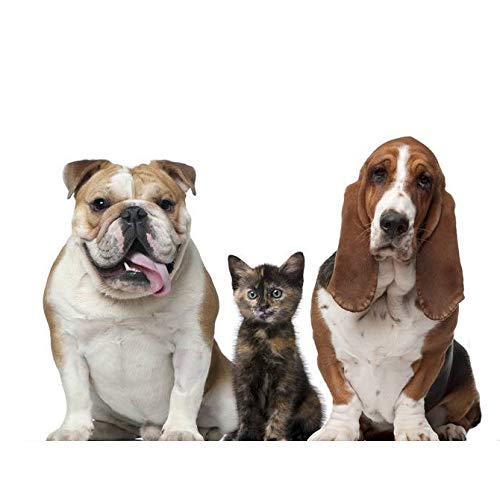 Round Deluxe Haustierbett für Hunde und Katzen, mit Reißverschluss, leicht zu waschen, Kissen für Katzen/Hunde-Fangqiyi-grau, 100cm